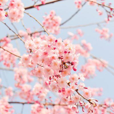 春と言えば??
