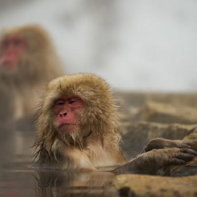 すすきの天然温泉